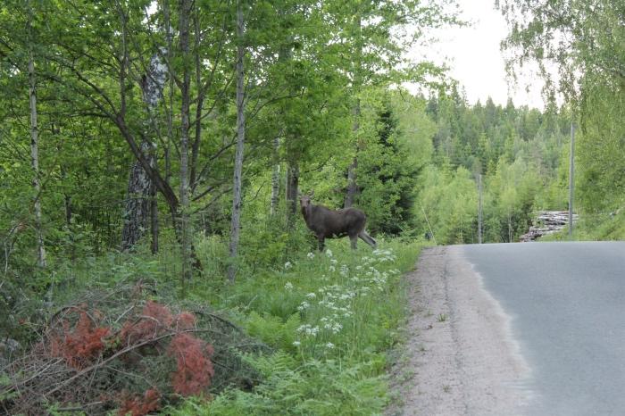 een straat in Zweden