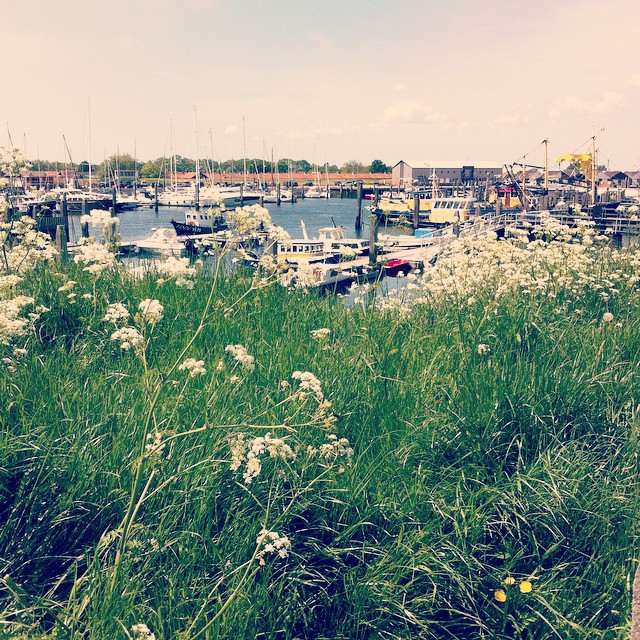 De haven van Yerseke
