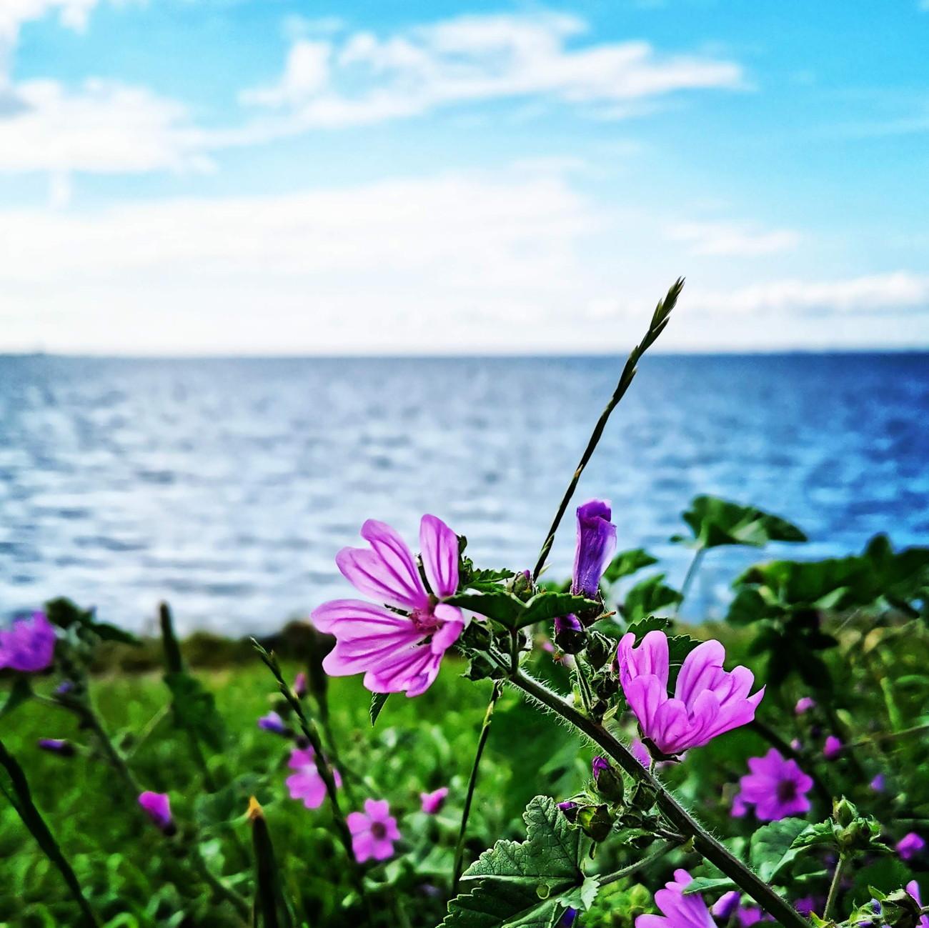 bloemen aan de Oosterschelde