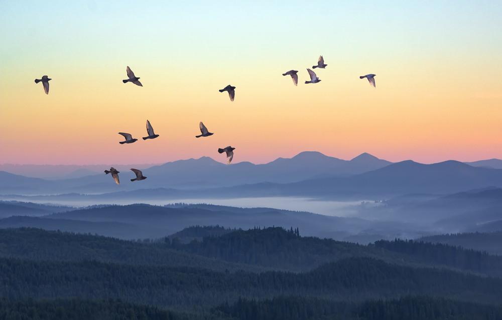 Over wandelen - vroeg in de morgen, de zon komt op en vogels vliegen