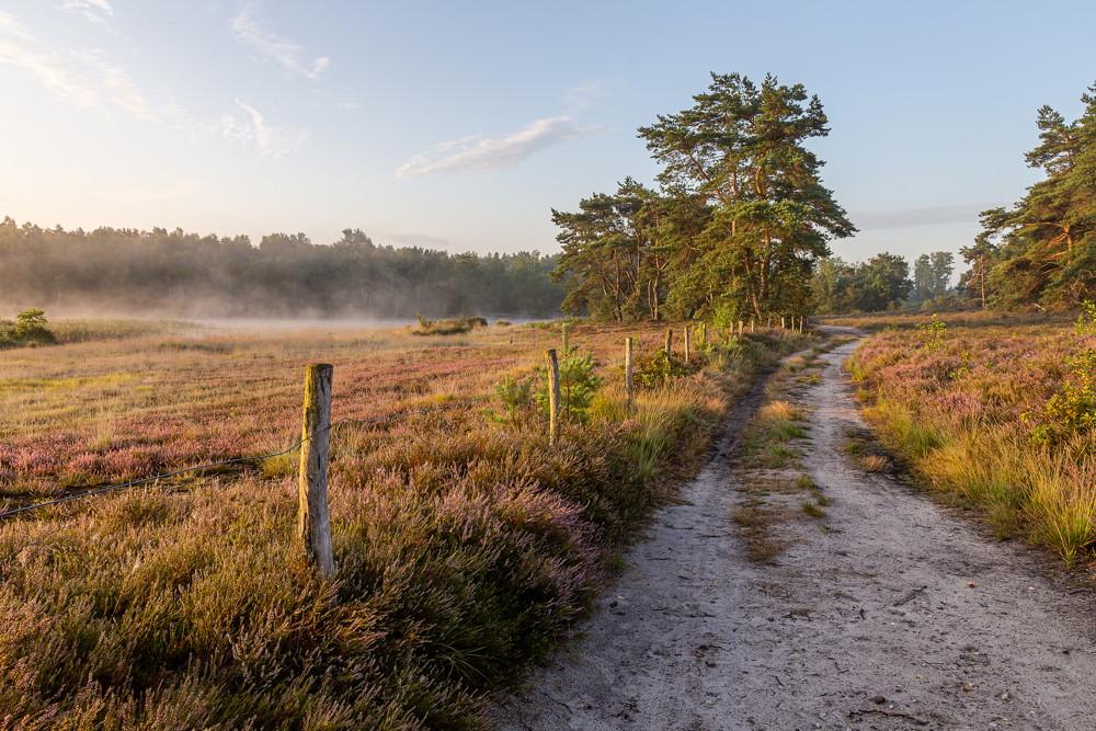 De heide in het zuiden van Limburg